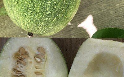 A Pumpkin Got It On with A Spaghetti Squash – The Tale of the Cross-pollinated Squash