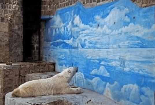 Eisbär Zoo
