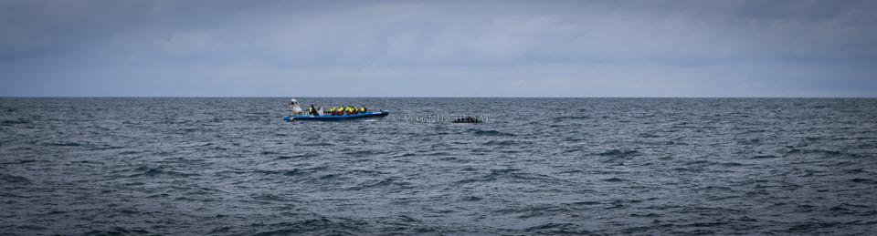 Speedboat bei Buckelwal, Husavik Island
