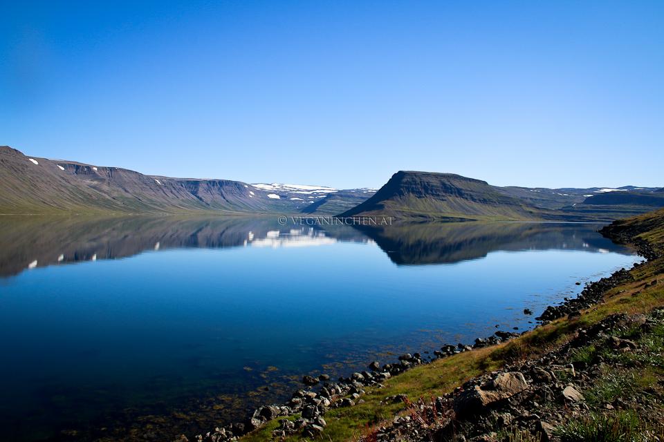 Westfjorde Island veganinchen