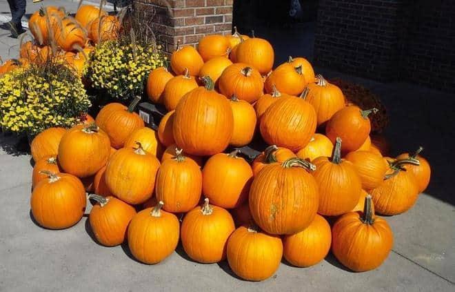 Pumpkins edited