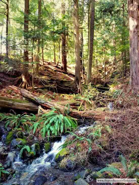 Hiking in Moran State Park on Orcas Island