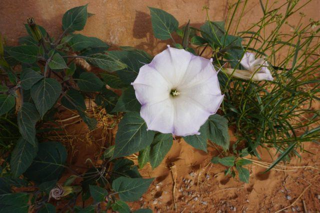 flowerride