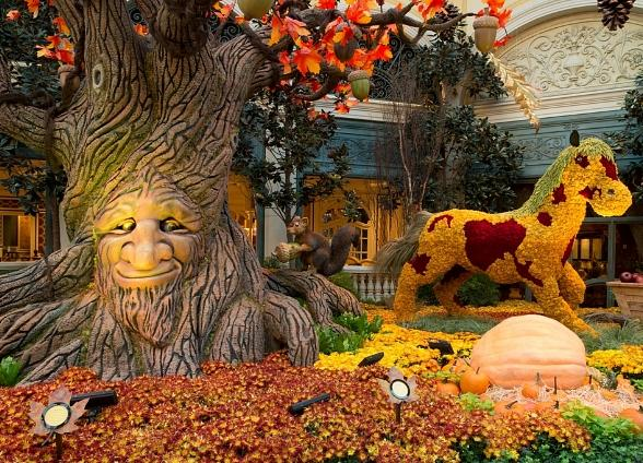 Fall Pumpkin Patch Wallpaper Harvest Display Brings Crisp Autumn Air To Bellagio S
