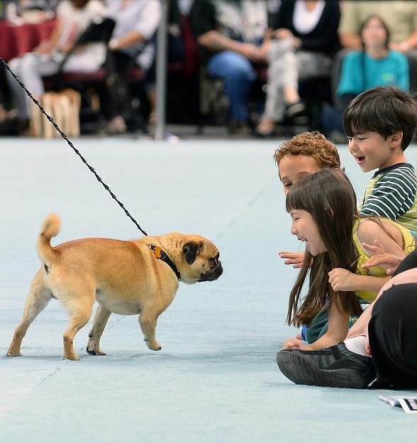 "The Animal Foundation's 12th Annual ""Best in Show"" at Orleans Arena April 26"