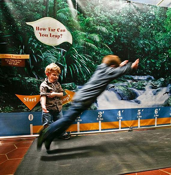 Rainforest Adventure Swings into the Las Vegas Natural History Museum now through Sept. 4