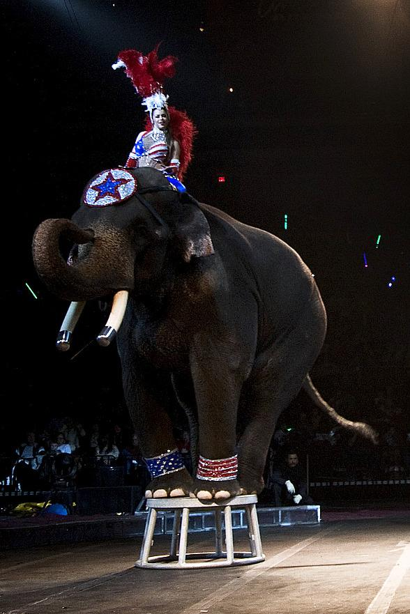 Interactive 2013 Zelzah Shrine Circus Brings New Line-up to Orleans Arena Jan. 10-13