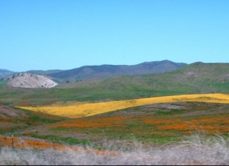 Paso Robles Hills in Spring