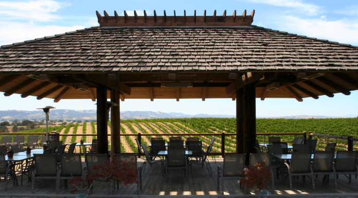 Eberle vineyards and canopy