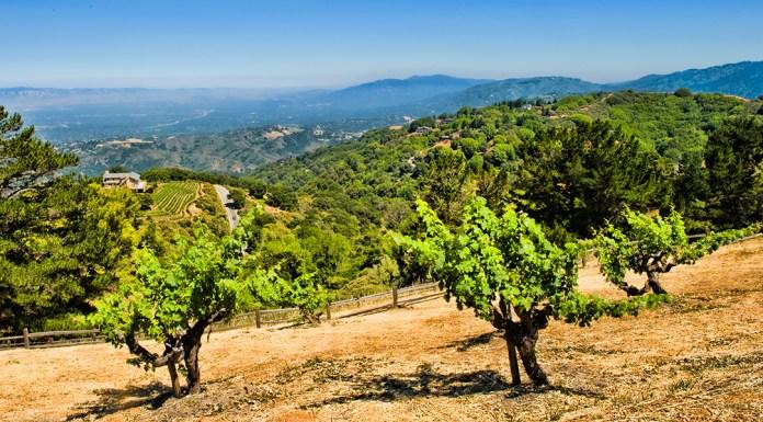 View from Ridge Winery