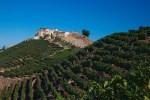 Malibu Vineyards We Visited