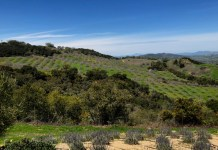 View at DAOU