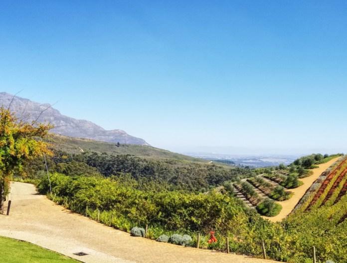 Conde vineyards