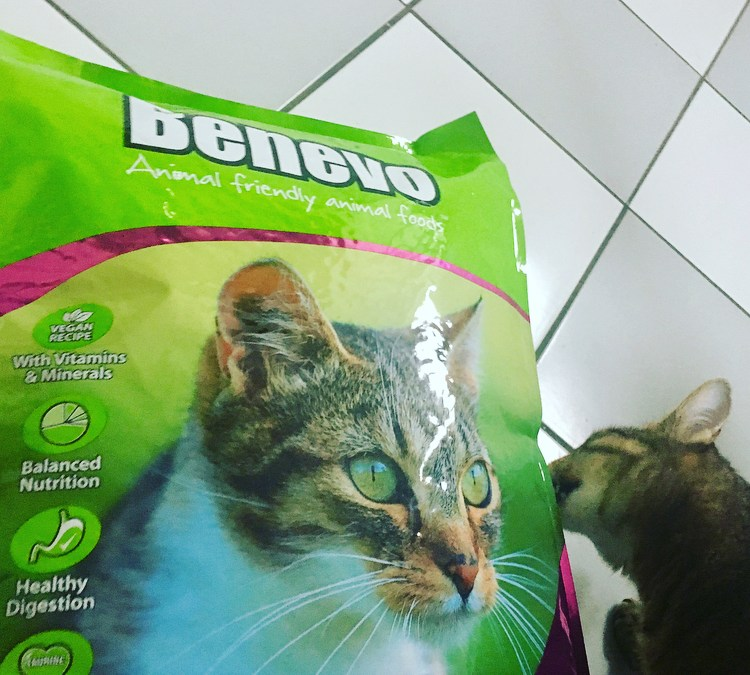 Vegane Katzen und Hunde