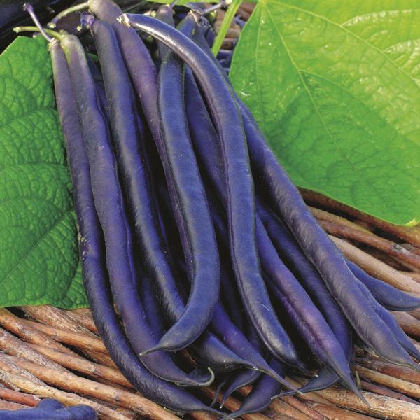 Best Soil Vegetables