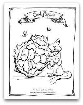 Vegetable Seed Packet Coloring Coloring Pages