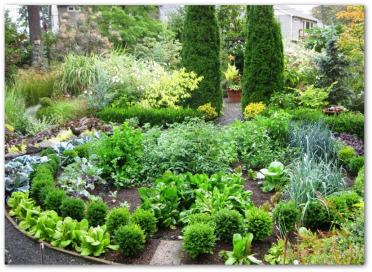 Ornamental Vegetable Garden Plants Ideas Pictures