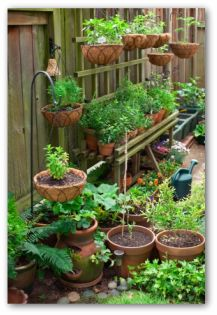 Container Vegetable Gardening Tips Techniques And Ideas