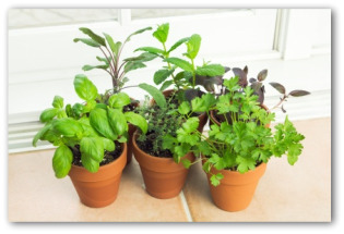 Indoor Vegetable Garden Planning Tips And Ideas