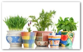 Indoor Vegetable Garden Planning Tips And Ideas