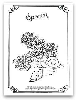 Free Vegetable Garden Coloring Books