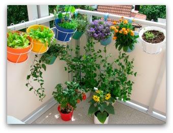 Basic Container Garden Designs