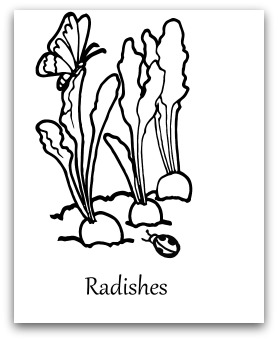 Carrot Seed Carrot Coloring Page To Coloring Pages