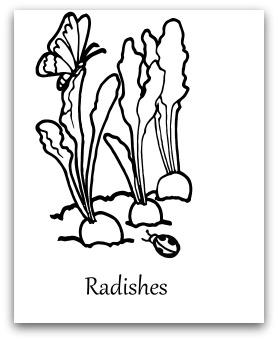 Radish Seed Diagram, Radish, Free Engine Image For User