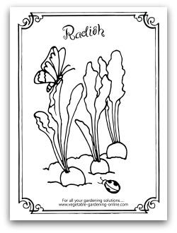 free vegetable garden coloring
