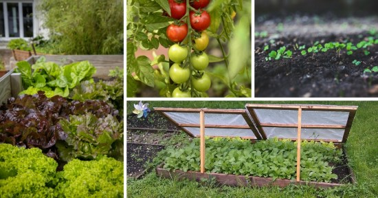 successful organic gardening tips