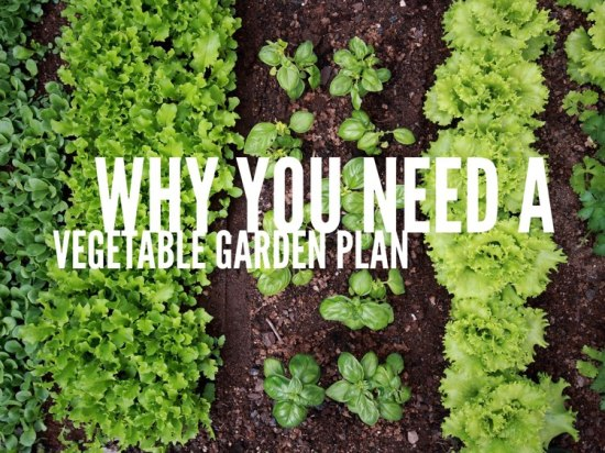 Why you need a vegetable garden plan