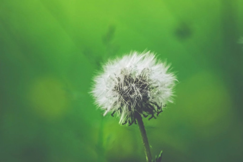 flowers cause seasonal allergies