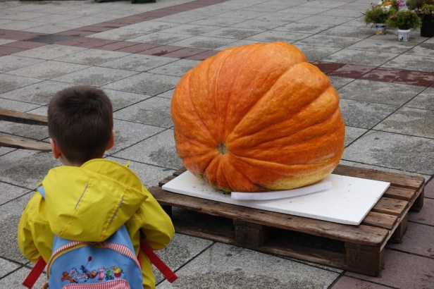huge pumpkin