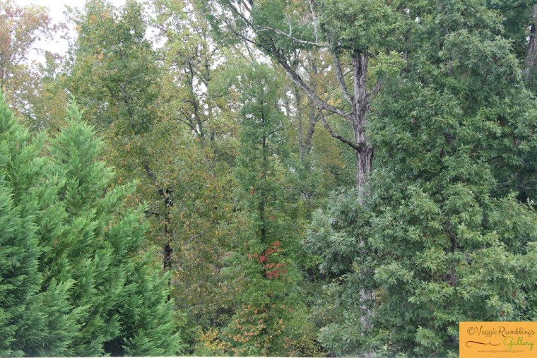 Beautiful sight - Rain drenched foliage in our backyard