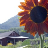 Blue Ridge Women In Agriculture Hosts High Country Farm Tour!