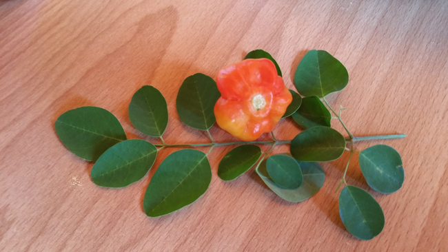 Moringa and Scotch Bonnet