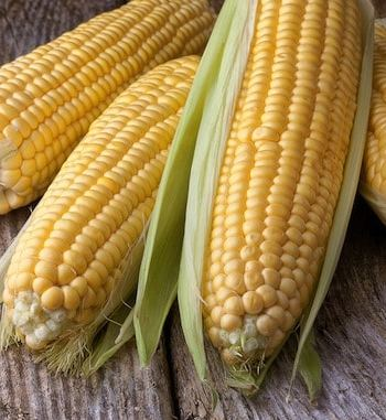 Fresh corn on table