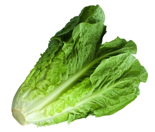 Image result for lettuce