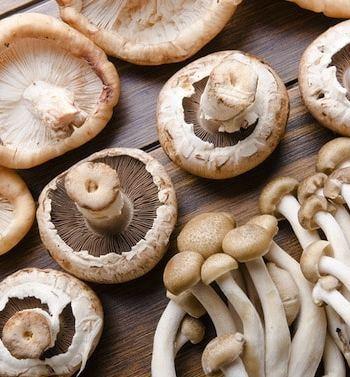 Mushroom varieties