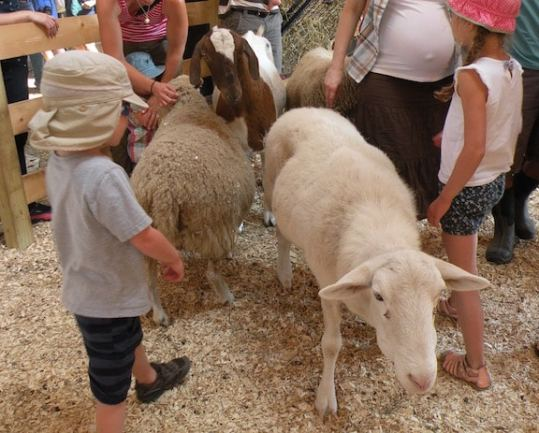 Children with sheep and goats at Woodstock Farm Animal Sanctuary