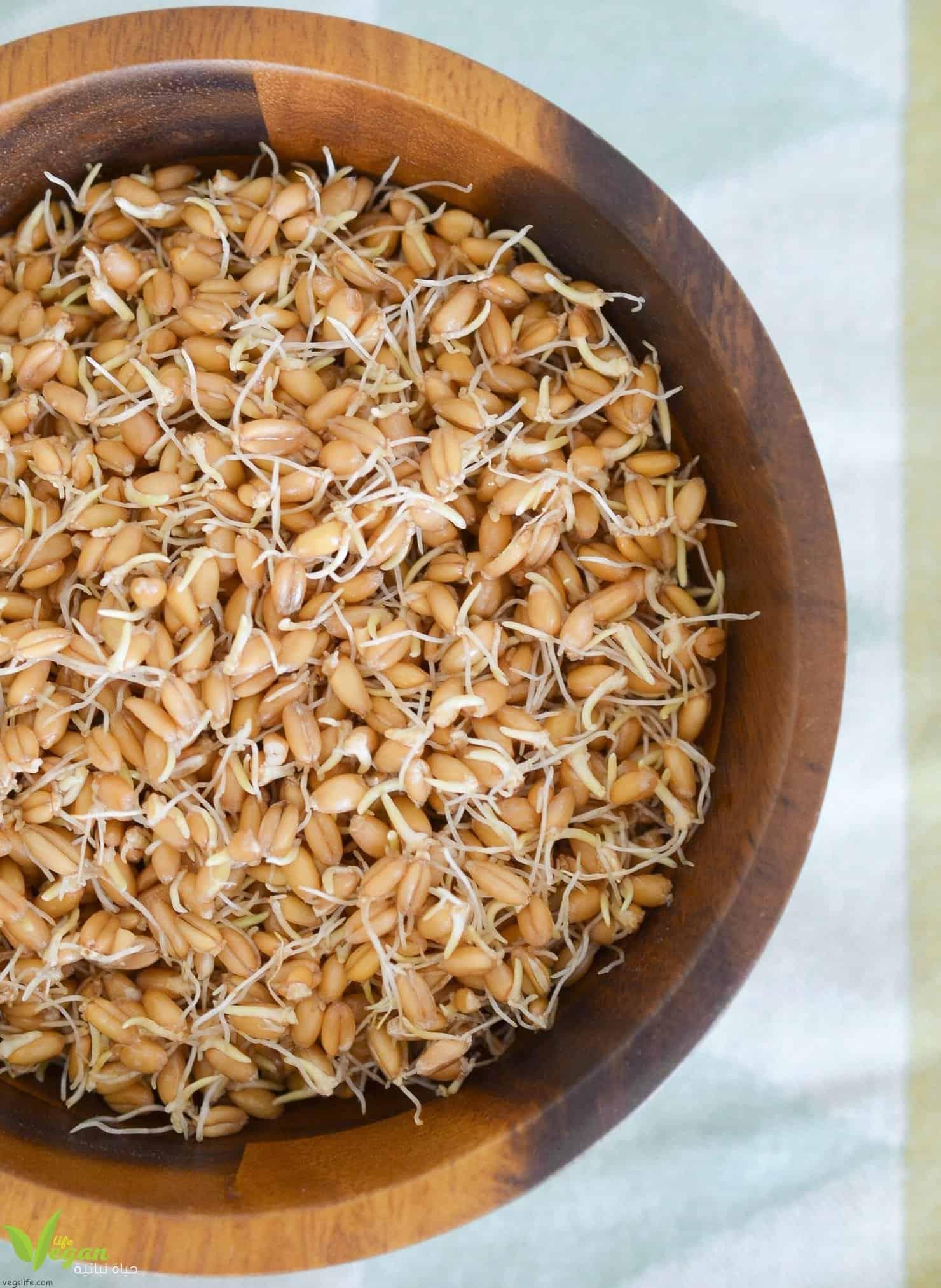 عشرة فوائد لتناول القمح المبرعم مع طريقة تحضيره.