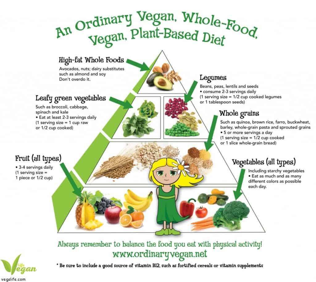 new food pyramid diagram wiring for warn 8274 winch الهرم الغذائي النباتي للأطفال و المراهقين كيف تغذي طفلك