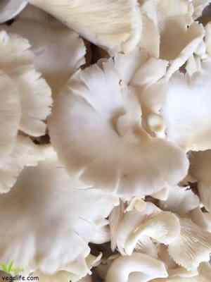 طريقة تحضير ستروغونوف الفطر النباتي بصلصة الكاجو