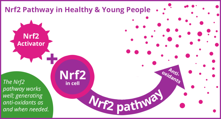 Nrf2 pathway for young healthy people