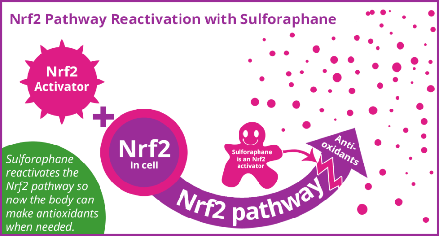 Nrf2 pathway reactivated with sulforaphane