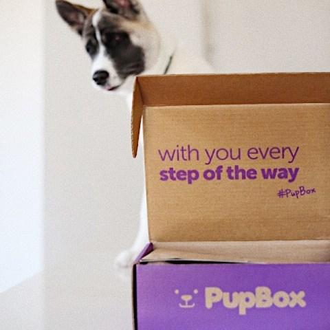 pupbox