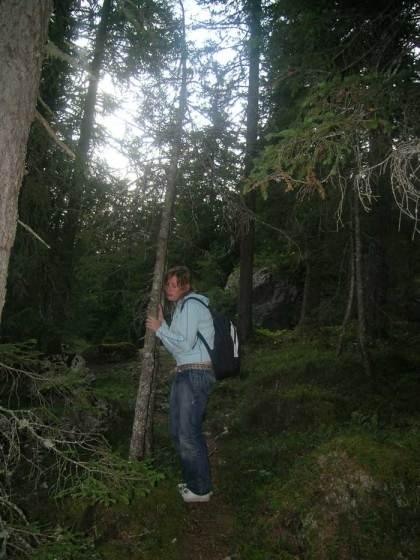 alberi-parlano.700