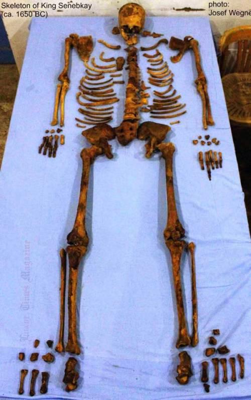 skeleto-of-King-SENEBKAY-araone-scheletro-penn-museum