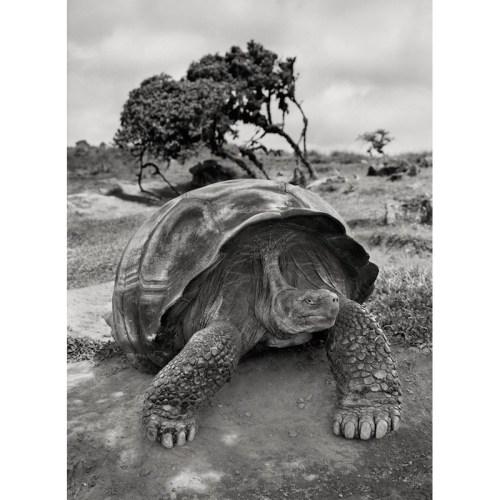 salgado-tartaruga