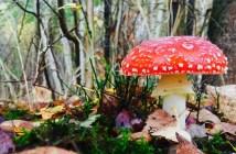 houby v angličtině